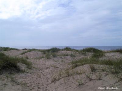 Overcast dunes.